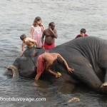 Inde du sud bain éléphants