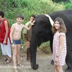 Inde du sud éléphant jumeaux