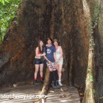 Parc national Bako Bornéo arbre géant
