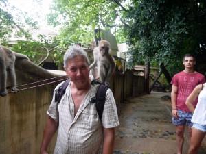 Les singes m'adorent, aurais-je un petit air de famille ?